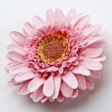 Patchwork Cutter & Embosser Gerbera Flower Set