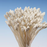 Cream Matt Pointed Head Stamens - Large