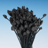 Black Matt Pointed Head Stamens - Large