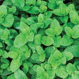 PME 100% Natural Flavour - Peppermint (25g / 0.88oz)