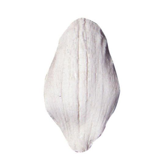 SK Great Impressions Petal Veiner Orchid Cymbidium