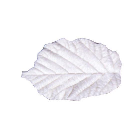 SK-GI Leaf Veiner Hazel (Corylus) Set of 2 4.0/3.5cm