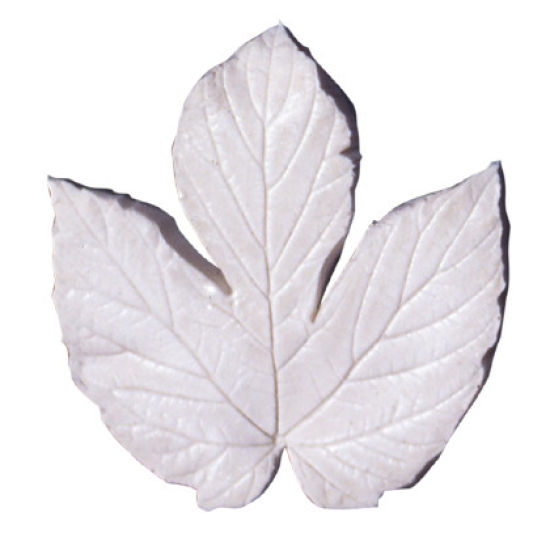 SK-GI Leaf Veiner Hops (Humulus) Very Large 8.5cm