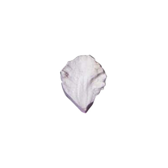 SK-GI Petal Veiner Clematis- Viticella 3.5cm