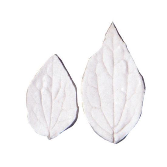 SK-GI Leaf Veiner Philadelphus (Mock Orange) Medium/Small 5.0/3.5cm