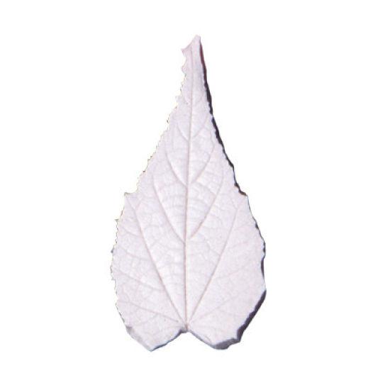 SK-GI Leaf Veiner Flowering Maple (Abutilon Striatum) Small 5cm