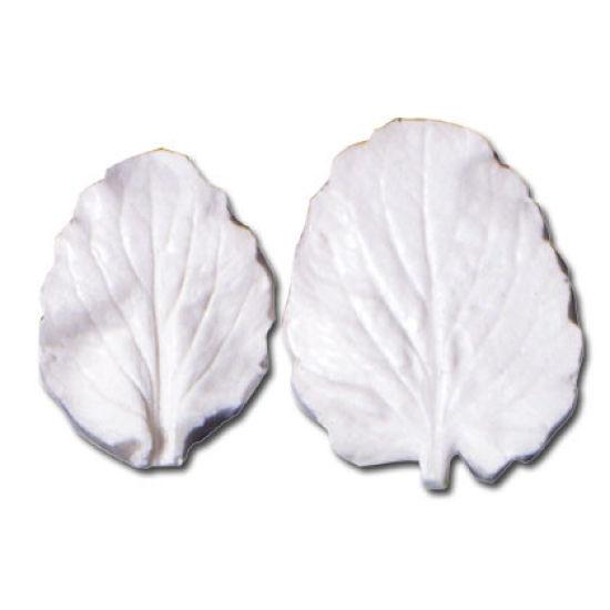 SK-GI Leaf Veiner Pansy Large (Viola) Large/Medium 5.5/4.5cm