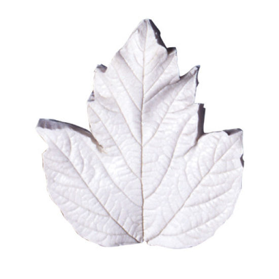 SK-GI Leaf Veiner Guelder Rose (Viburnum-O) Very Large 9.5cm