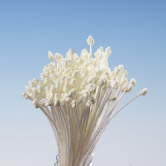 Cream Matt Pointed Head Stamens - Small