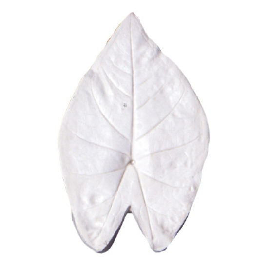 SK-GI Leaf Veiner Caladium ( Angels Wings) Very Large 12.0cm