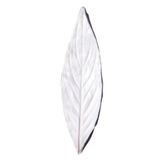 SK-GI Leaf Veiner Homalomena (Ribbon Bush) 13.0cm