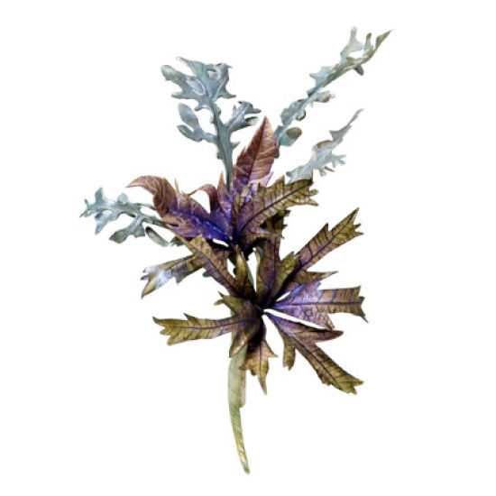 SK Great Impressions Leaf Veiner Sea Holly (Eryngium)