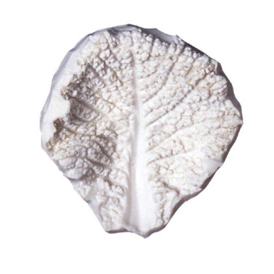 SK-GI Leaf Veiner Cabbage- Savoy 8.0cm