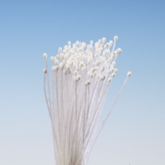 White Matt Round Head Stamens - Micro