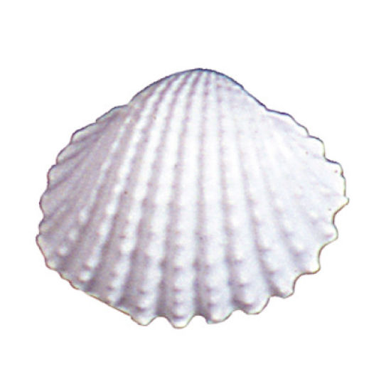 SK-GI Silicone Mould Shell Prickle Cockle